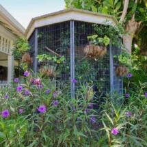 Dove Aviary